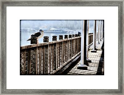 Seagull On The Boardwalk Framed Print by Sally Bauer