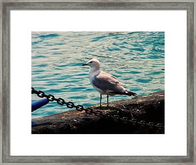 Seagull On The Chicago Seawall Framed Print