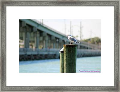 Seagull On The Dock Framed Print