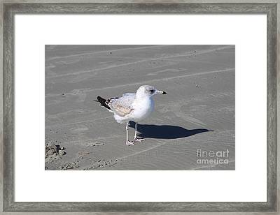 Framed Print featuring the pyrography Seagull On The Hunt by Chris Thomas