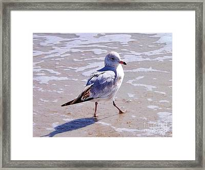 Seagull On The Run Framed Print