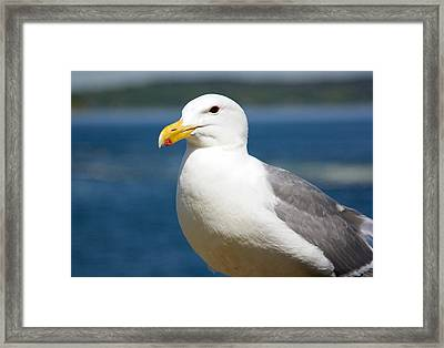 Seagull On The Sound Framed Print