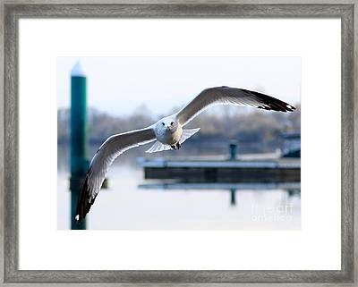 Seagull Over The Pier Framed Print by Carol Groenen