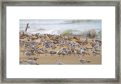 Seagull Paradise Framed Print by Betsy Knapp