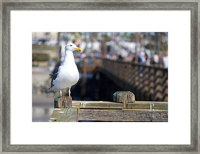 Framed Print featuring the photograph Seagull by Robert  Aycock