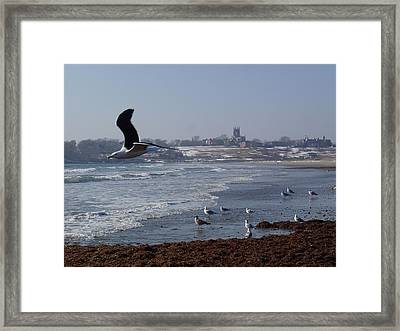 Seagull Framed Print by Robert Nickologianis