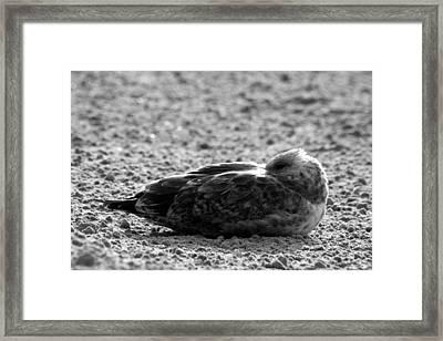 Seagull Sand Bath Framed Print