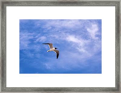 Framed Print featuring the photograph Seagull by Sennie Pierson