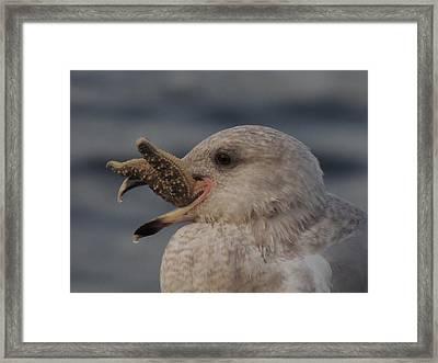 Seagull Series Framed Print