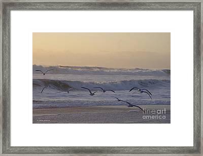 Seagull Sunrise Framed Print