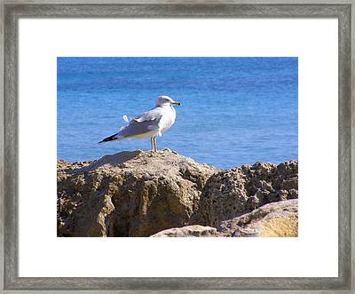 Framed Print featuring the photograph Seagull by Artists With Autism Inc