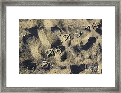 Seagull Tracks Framed Print