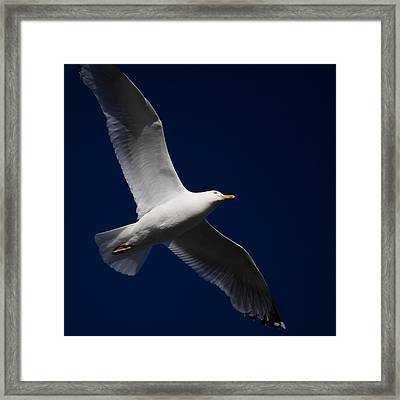 Seagull Underglow Framed Print
