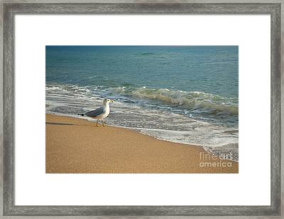 Seagull Walking On A Beach Framed Print by Sharon Dominick