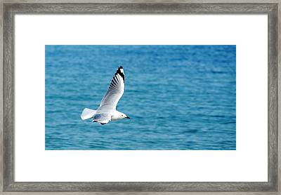 Framed Print featuring the photograph Seagull by Yew Kwang