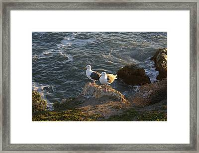 Seagulls Aka Pismo Poopers Framed Print by Barbara Snyder