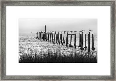 Seagulls Aligned Framed Print by Lynn Palmer