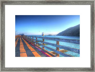 Seagulls And Ocean Framed Print
