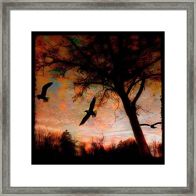 Seagulls At Dusk Framed Print by Gothicrow Images