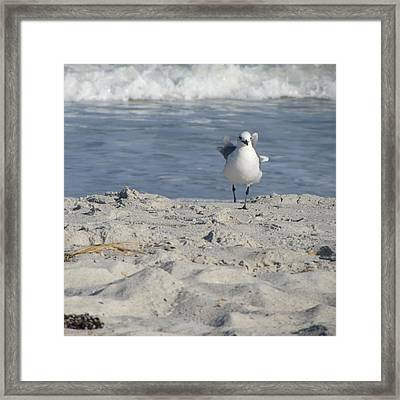 Seagulls At Fernandina 4 Framed Print by Cathy Lindsey