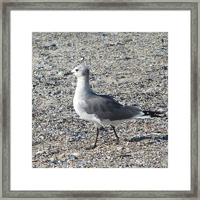 Seagulls At Fernandina 5 Framed Print by Cathy Lindsey