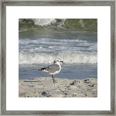 Seagulls At Fernandina 6 Framed Print by Cathy Lindsey