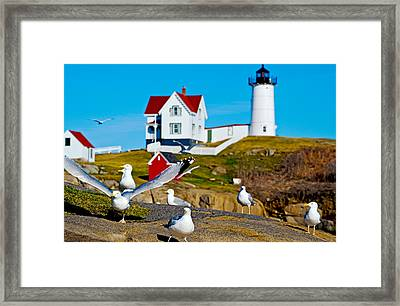 Seagulls At Nubble Lighthouse, Cape Framed Print by Panoramic Images