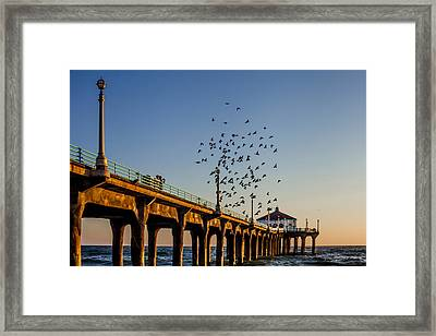 Seagulls At The Pier Framed Print