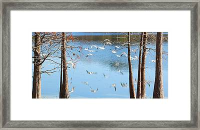 Seagulls Flying Over Water With Reflections Framed Print by Rebecca Brittain