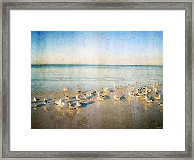 Seagulls Gathering By Sharon Cummigs Framed Print by William Patrick