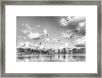 Seagulls Framed Print by Howard Salmon