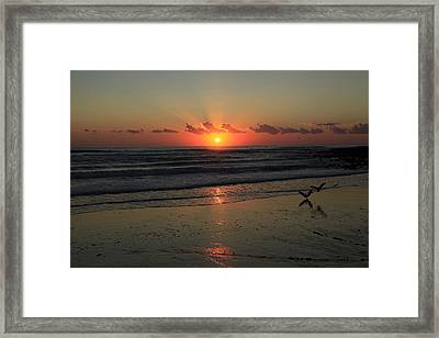 Seagulls Landing At Dawn Framed Print by Noel Elliot