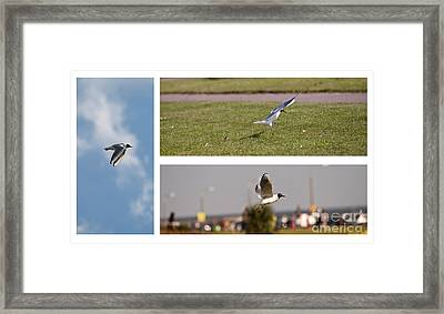Seagulls Framed Print by Lesley Rigg