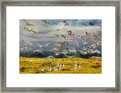 Seagulls Of Protection Island Framed Print