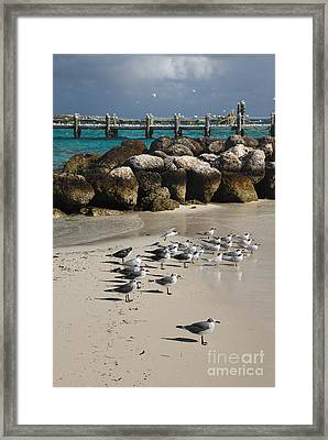Seagulls On Coco Cay Bahamas Framed Print by Amy Cicconi