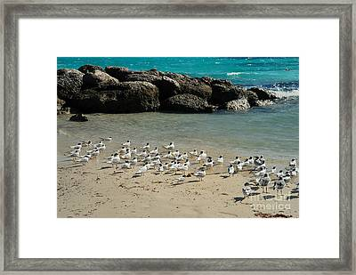Seagulls On The Beach Framed Print