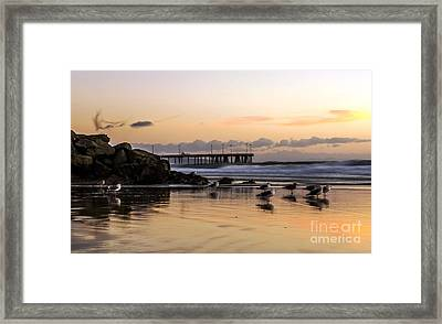 Seagulls On The Coast Framed Print by Mike Ste Marie