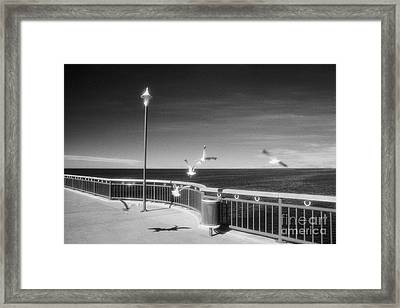 Seagulls On The Pier Framed Print