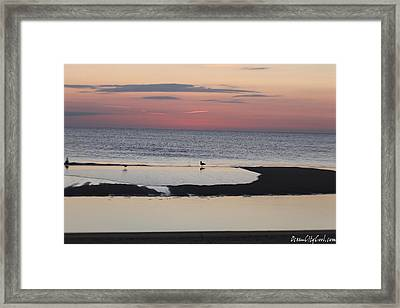 Framed Print featuring the photograph Seagulls On The Seashore by Robert Banach