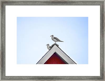 Seagulls Perched On The Rooftop Framed Print by Bill Cannon