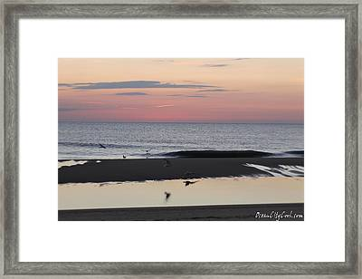 Framed Print featuring the photograph Seagulls Sea And Sunrise by Robert Banach