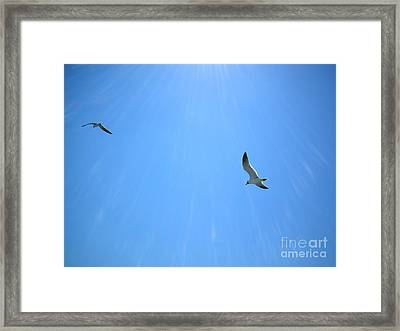 Seagulls Soar Framed Print by Audrey Van Tassell