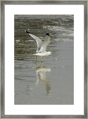 Seagulls Takeoff Framed Print by Kathy Gibbons