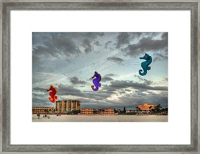 Seahorse Dance Framed Print by William Fields