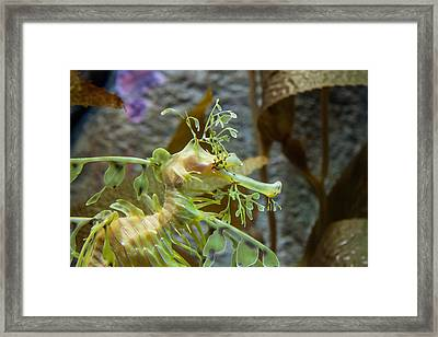 Seahorse Framed Print by Mike Lee