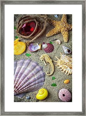 Seahorse With Many Sea Shells Framed Print