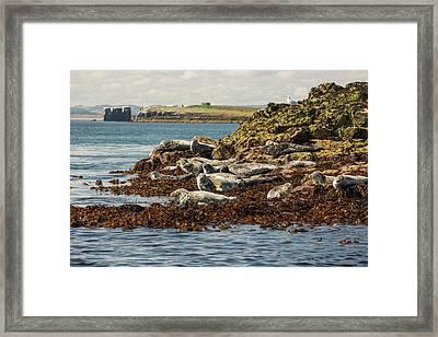 Seahouses On The Northumberland Coast Framed Print