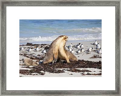 Seal Beach Battle Framed Print