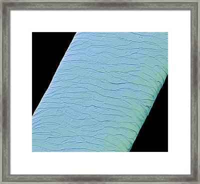 Seal Hair Framed Print by Steve Gschmeissner