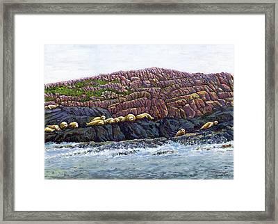 Seal Island Framed Print by Thomas Michael Meddaugh